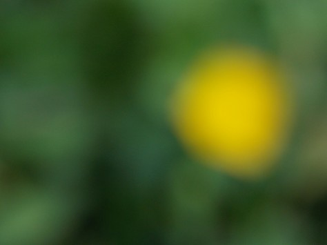 out of focus buttercup