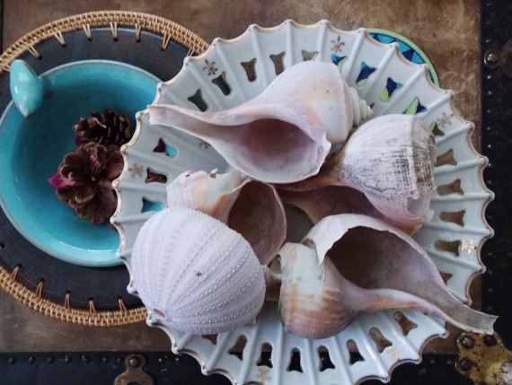 sea shells in a bowl