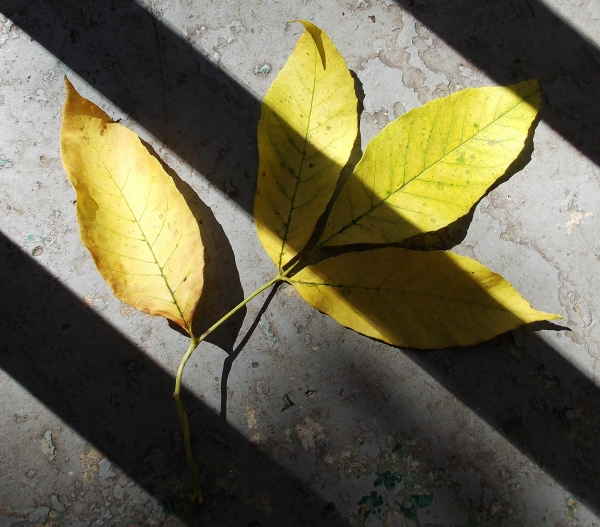 leaves with shadows