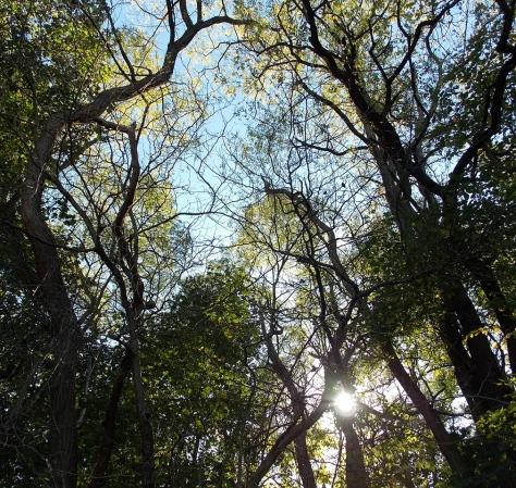 sky trees sun