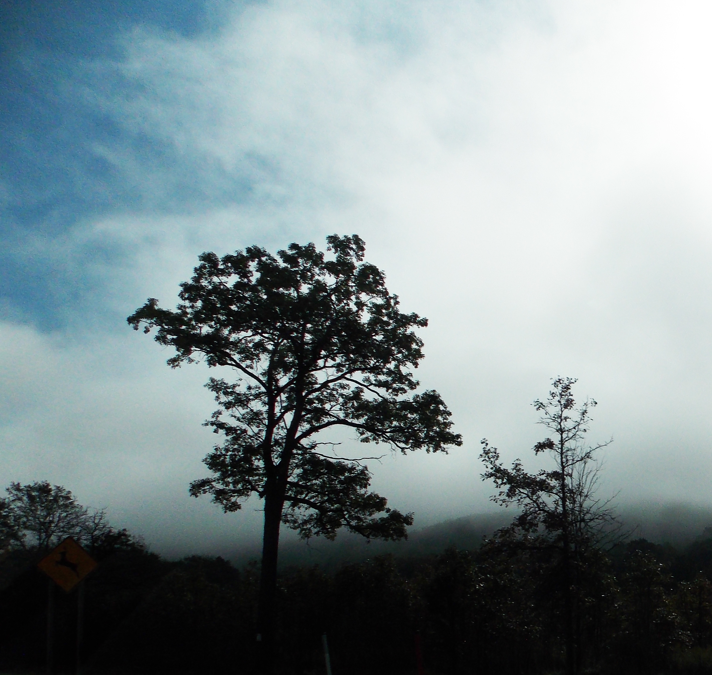trees fog blue sky