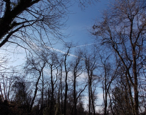 blue skies with leafless tress