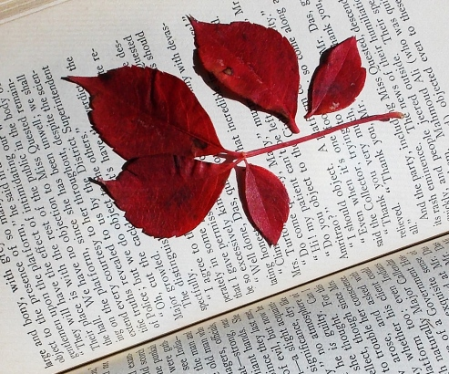 leaf on book