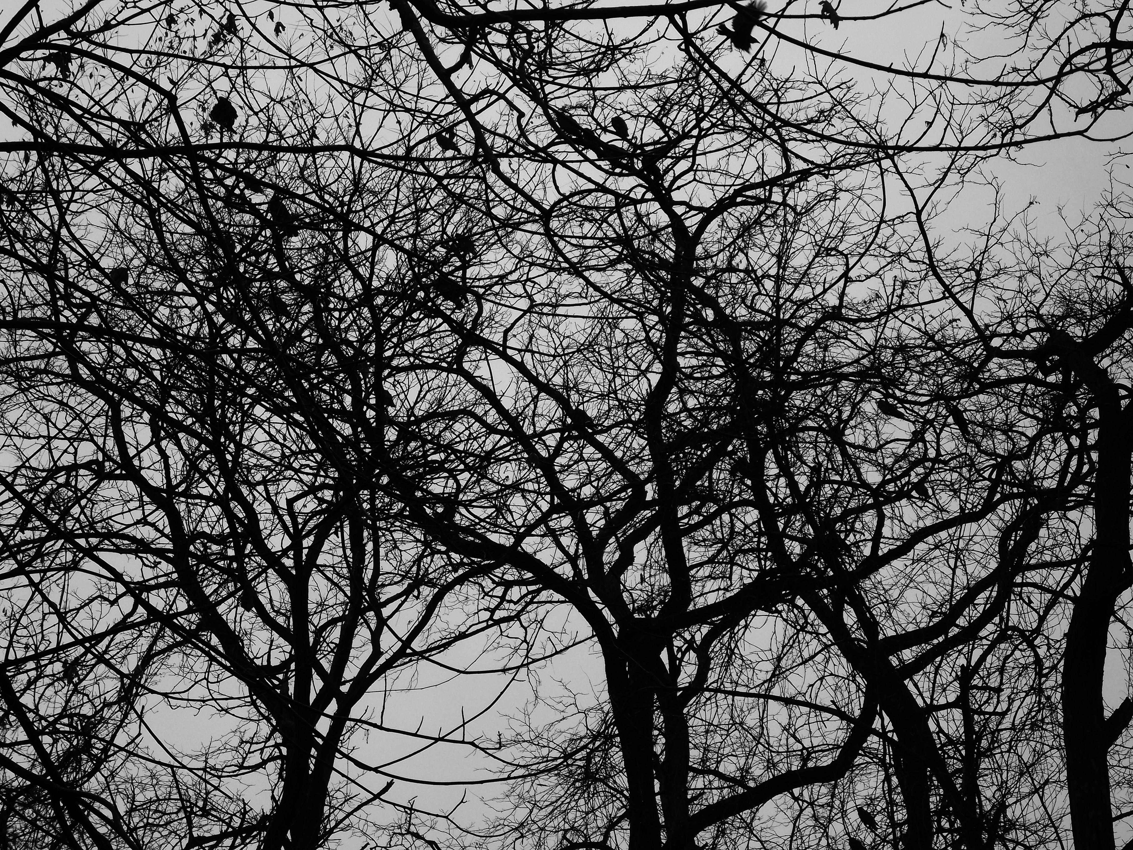 flying black bird in winter